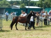 lato2013-konie-huculskie-10