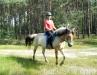 lato2013-konie-huculskie-2
