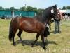 lato2013-konie-huculskie-5