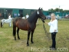 lato2013-konie-huculskie-7