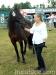 lato2013-konie-huculskie-8