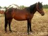 piosenka-konie-huculskie-2