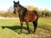 piosenka-konie-huculskie-3