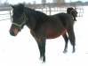 piosenka-konie-huculskie-4