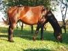 piosenka-konie-huculskie-5