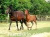 piosenka-konie-huculskie-7