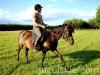 piosenka-konie-huculskie-8