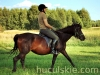 piosenka-konie-huculskie-9