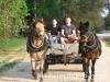 wiosna2011-jazda-konna-8