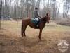 1 Konie Huculskie nauka jazdy