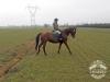 10 Konie Huculskie nauka jazdy