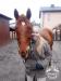 12 Konie Huculskie nauka jazdy