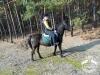17 Konie Huculskie nauka jazdy