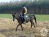 18 Konie Huculskie nauka jazdy
