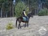 19 Konie Huculskie nauka jazdy