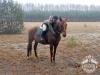 2 Konie Huculskie nauka jazdy