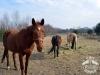 20 Konie Huculskie nauka jazdy