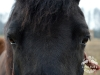 21 Konie Huculskie nauka jazdy