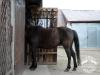 24 Konie Huculskie nauka jazdy