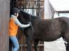 25 Konie Huculskie nauka jazdy