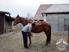 27 Konie Huculskie nauka jazdy