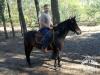 37 Konie Huculskie nauka jazdy