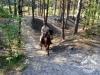 40 Konie Huculskie nauka jazdy