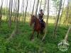 43 Konie Huculskie nauka jazdy
