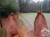 5 Konie Huculskie nauka jazdy