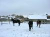 zima2009-jazda-konna-11