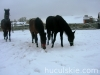 zima2009-jazda-konna-13