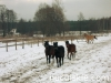 zima2009-jazda-konna-2