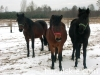 zima2009-jazda-konna-3