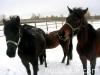 zima2009-jazda-konna-5