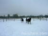 zima2009-jazda-konna-6