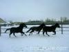 zima2009-jazda-konna-7
