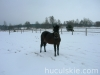 zima2009-jazda-konna-8