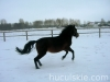 zima2009-jazda-konna-9