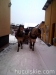 zima2010-jazda-konna-1
