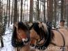 zima2010-jazda-konna-9