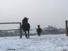 zima2011-konie-huculskie-11