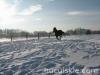 zima2011-konie-huculskie-3