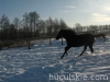 zima2011-konie-huculskie-4