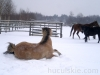 zima2013-jazda-konna-1