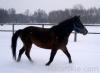zima2013-jazda-konna-10