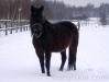zima2013-jazda-konna-11