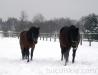 zima2013-jazda-konna-14