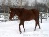 zima2013-jazda-konna-15