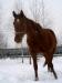zima2013-jazda-konna-19
