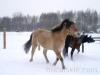 zima2013-jazda-konna-2